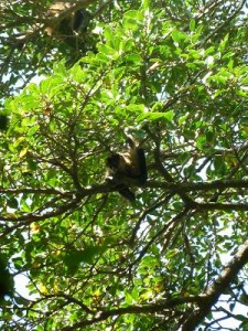 shameless monkey
