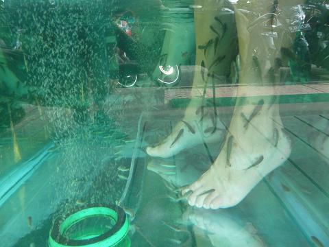 Fish feet massage. Yep, those are Kelli's feet, being scrubbed clean.