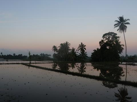 Rice field sunrise, taken by Kelli while on her a walk with her raw-food retreat group.