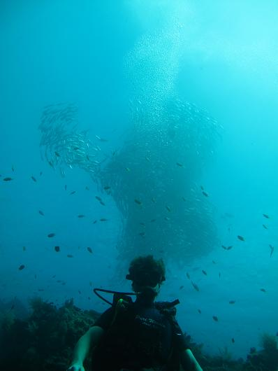 Brad in front of a massive school of jack fish, a barracuda about 15 feet away just eyeballing his dinner.